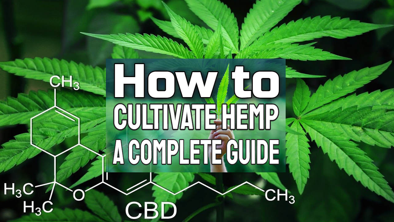 """Image text: """"How to cultivate hemp guide""""."""