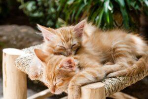 kittens sleeping