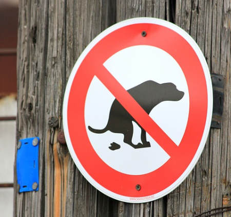 Dog poo dangers for the environment: A green RVer picks up their dog's poos...