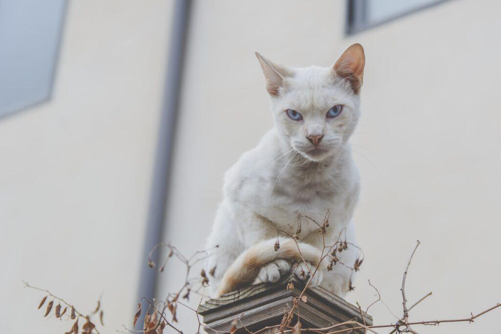 Egyptian cat