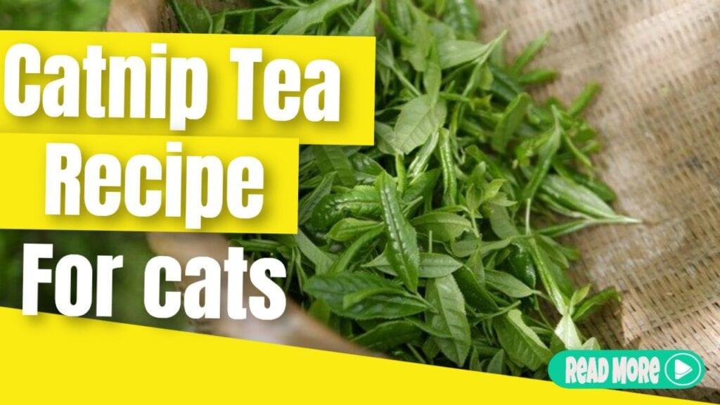 catnip tea recipe for cats