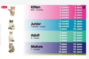 cat chart