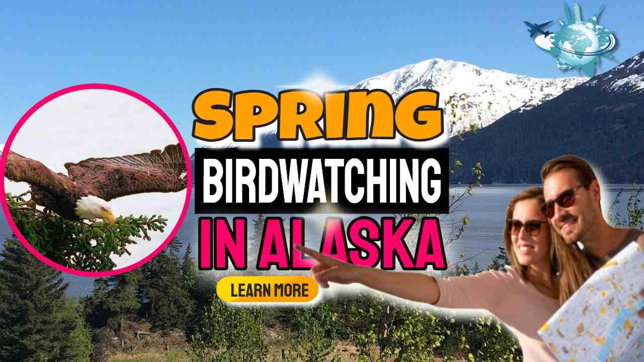 "Image text: ""Spring Birdwatching in Alaska""."